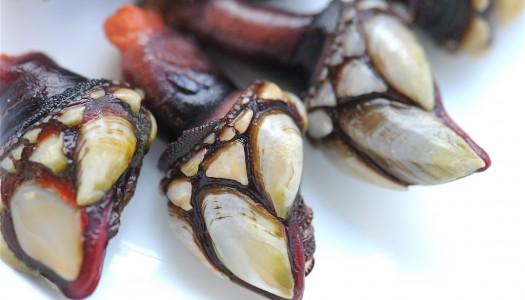Галисия: Гид по блюдам из морепродуктов