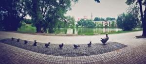 сквер у Большого Новодевичьего пруда