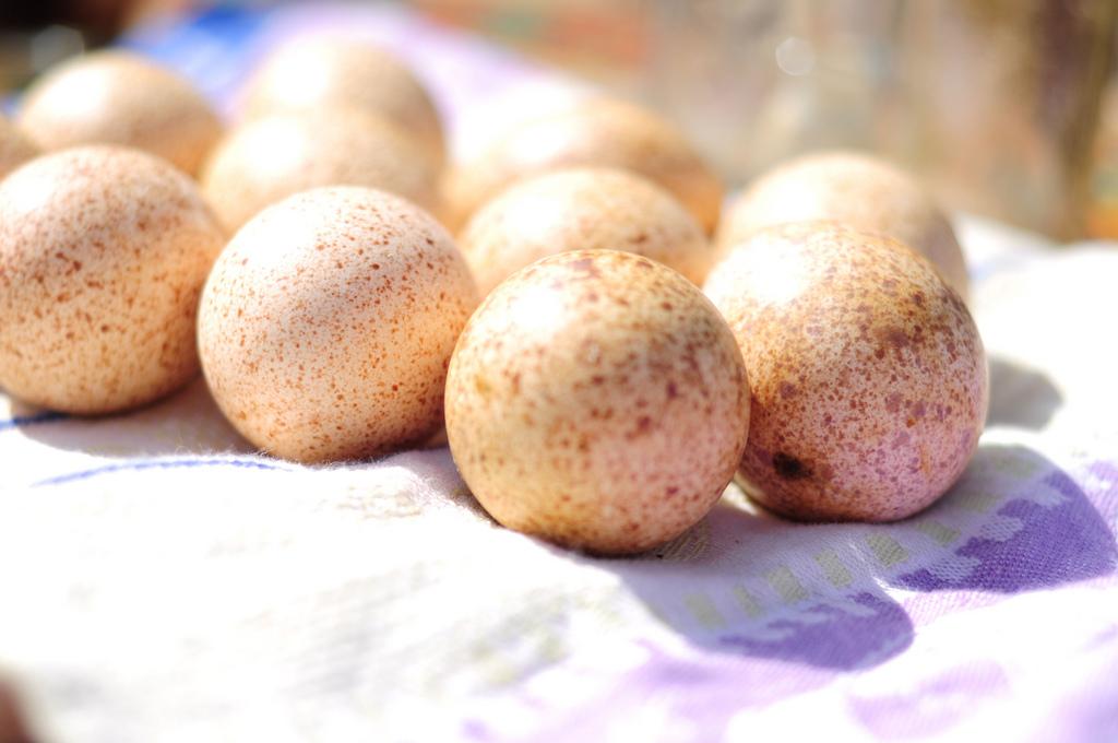 Индюшиные яйца. Фото: doglington