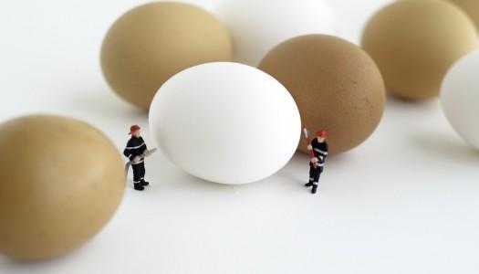 Полноценный гид по яйцам