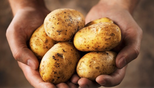Что делать со старой картошкой