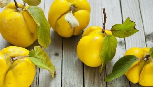 Золотое яблоко Афродиты» или чем полезна айва