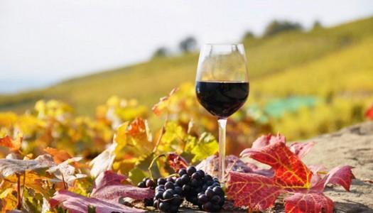 In vino veritas! Выбираем био-вино