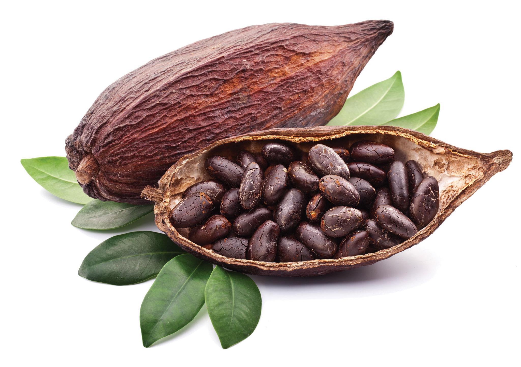 Какао тертое и какао масса